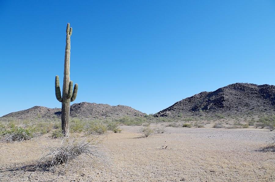 Lone Saguaro by Ken Mickel - Novices Only Landscapes ( saguaro cactus, desert, arizona, saguaro, cactus )
