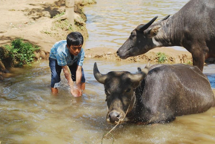 buffalos bathing by Sony Witjaksono - Animals Other Mammals