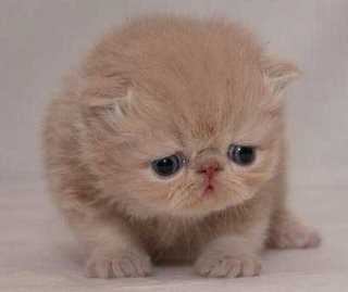 [gato_triste[3].jpg]