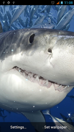 Shark Live Wallpaper 11 Screenshot 1539967