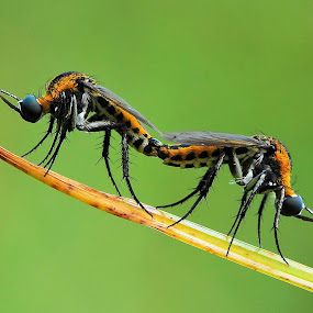 The Moment by Fadel Satriawan - Animals Insects & Spiders