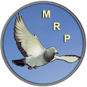 Racing Pigeon Speed icon