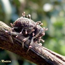 Arthropods parasitised by fungi