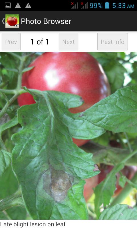 Purdue Tomato Doctor - screenshot