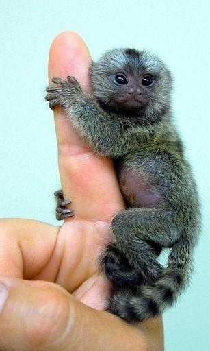 猴子动态壁纸