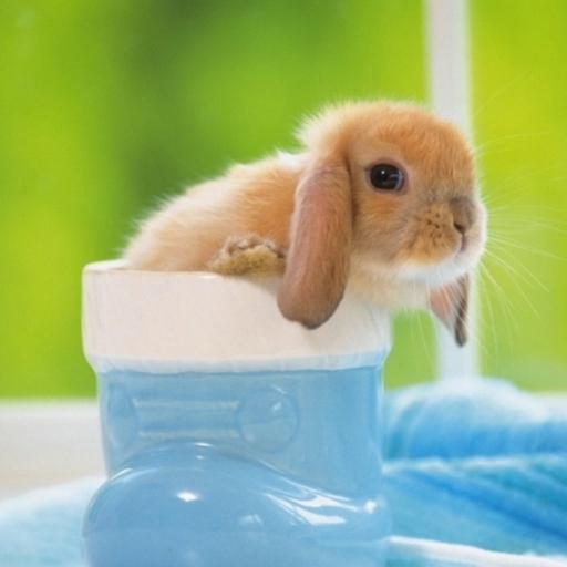 毛茸茸的小兔子壁紙 個人化 App LOGO-APP試玩