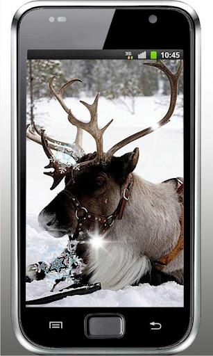 Winter Trees HD Live Wallpaper