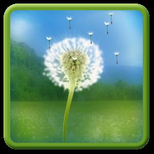 dandelion-field-lwp