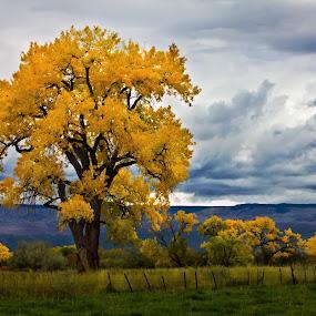 by David Short - Landscapes Mountains & Hills ( autumn, grand mesa, colorado, david lee short )