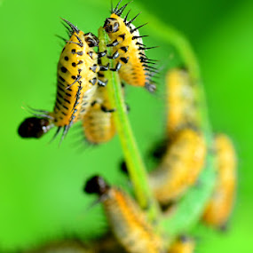 Climbing to the top by Stevie Go - Animals Insects & Spiders ( climb, macro, insects )