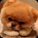 Puppy Wallpaper icon