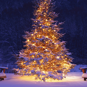 3D Christmas Live Wallpaper HD3D Christmas Live Wallpaper HD   Android Apps on Google Play. 3d Christmas Live Wallpaper Apk Free Download. Home Design Ideas