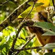 Biodiversity of Sumatra