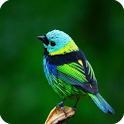 Bird Sounds 3D icon