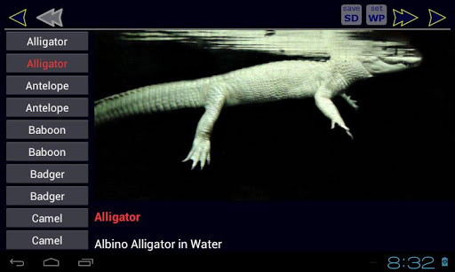 動物ABCブック