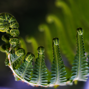 fern leaves by Keple MN - Nature Up Close Leaves & Grasses