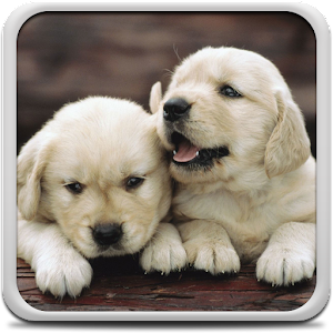 Puppies Live Wallpaper 11.0 Apk, Free