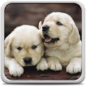 Puppies Live Wallpaper icon