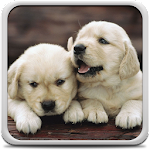 Puppies Live Wallpaper 11.0 Apk