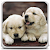 Puppies Live Wallpaper file APK for Gaming PC/PS3/PS4 Smart TV
