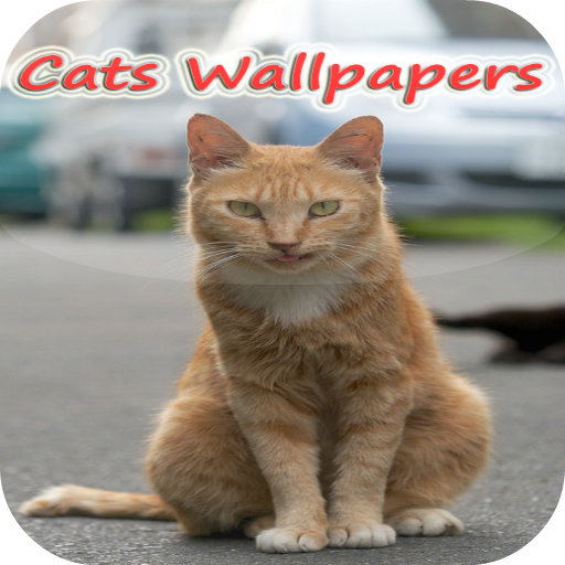 Xperia P Cats live Wallpapers 個人化 App LOGO-APP試玩