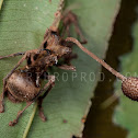 ant vs killer fungus