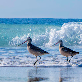 The March by Jamie Valladao - Animals Birds ( water, sand, marching, sandpipers, wave, beach, birds,  )