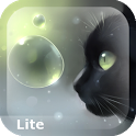 Curious Cat Lite icon