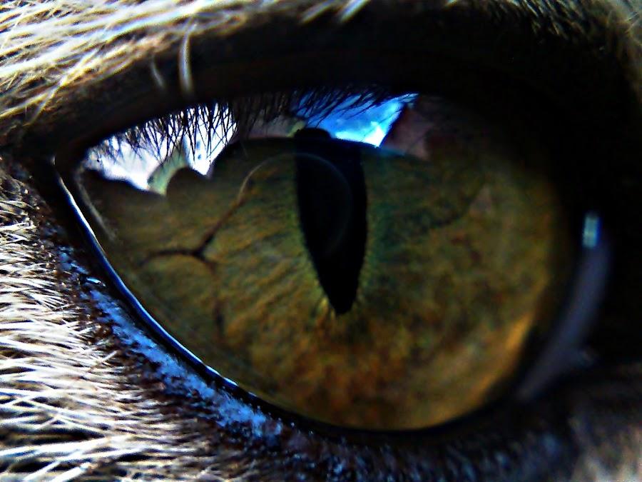 Cat's Eye by Hendrawan Prasetyo - Instagram & Mobile Other
