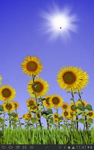Sunflowers Live Wallpaper v1.02