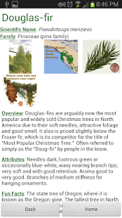 Doug Fir Christmas Tree Guide - screenshot thumbnail