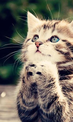 可愛的貓壁紙