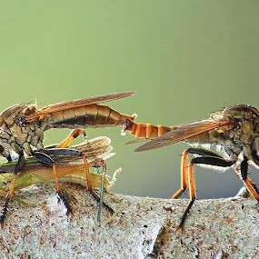 Double moment by Fadel Satriawan - Animals Insects & Spiders