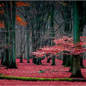 J2014-3 by Dusan Vukovic - Landscapes Forests