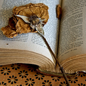 Book and Rose by Miren Etcheverry - Artistic Objects Still Life ( still-life, book, atelier )