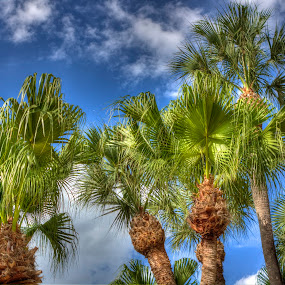 Palm Trees by Ward Vogt - Nature Up Close Trees & Bushes ( blue, florida, palm trees, orlando, photography, gree, ward vogt )