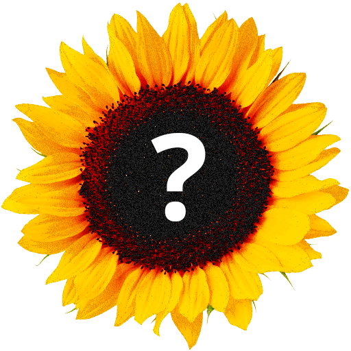 Угадай цветок! Что за цветок?
