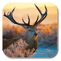 zz[Unpublish]Xmas Deer icon