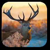 Xmas Deer Live Wallpaper