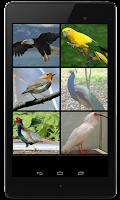 Screenshot of Birds Sounds