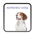 Adorable Dogs Live Wallpaper icon