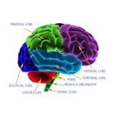 Look Ahead Brain Trainer