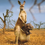 Kangaroos Water LWP APK icon