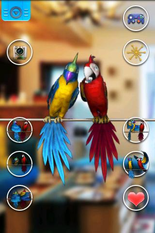 Talking Parrot Couple Free - screenshot