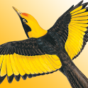 Morcombe's Birds of Aus (Lite) icon