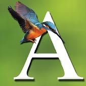 Alcedo Ornitologia e Natura