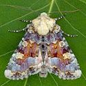 Oligia rampartensis
