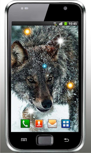Angry Wolf HD live wallpaper