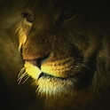 Talking Lion logo