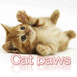 Cat paws Photo collection download